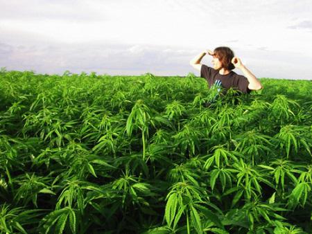 oakland-legalizes-marijuana