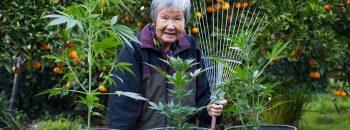 выращивание конопли, азия, легализация конопли, лечебные свойства каннабиса, преступления, наказание, запрещенные вещества, уголовный суд, легализация, казнь за марихуану,